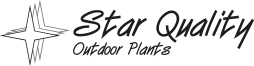 Star Quality - Outdoor Plants